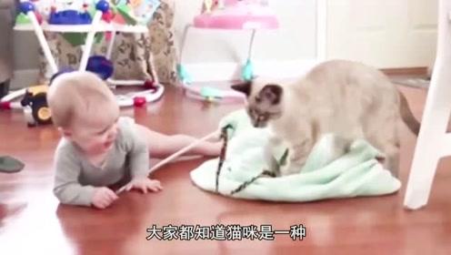 萌娃和猫咪玩耍,接下来的画面让网友不禁大笑!
