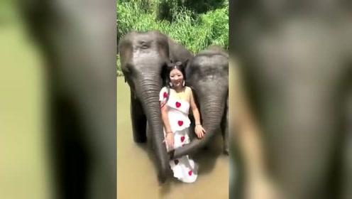 泰国的大象,不愧是职业喷子!美女玩的很嗨呀