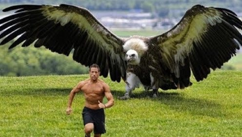 世界最大猛禽,翼展可达7米,竟以狮子为食!
