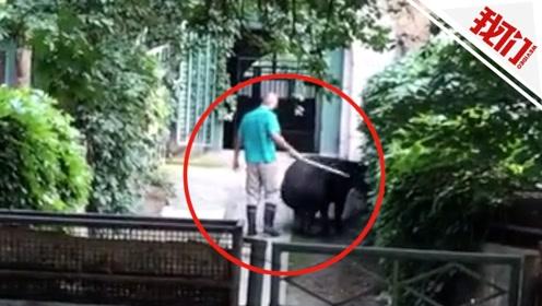 北京动物园一只貘不想回馆被饲养员抽打 园方:将加强管理