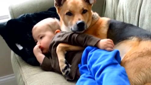 妈妈让我养狗吧!研究证明:养狗有益于心脑血管健康