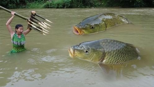 柬埔寨小妹自制鱼叉捕鱼,叉下去轻松捕到大鱼,竹架上烤着吃真香