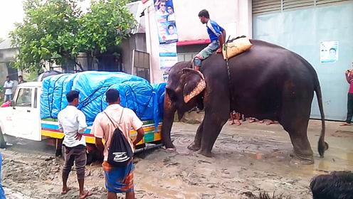 卡车深陷泥潭无法动弹,大象出现的那一刻,霸气开始了