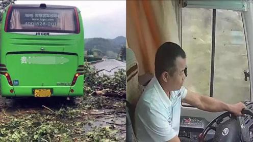 惊魂一刻!大树被狂风连根拔起,司机淡定应对救下全车人