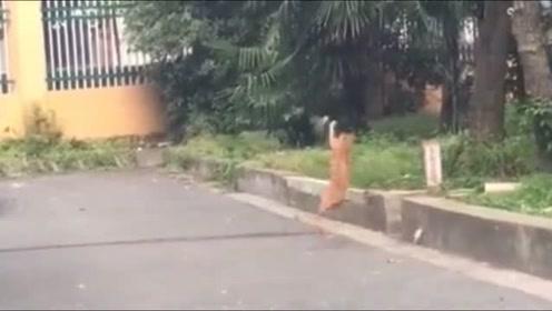 这猫的速度也太快了吧,连小鸟都抓得到!