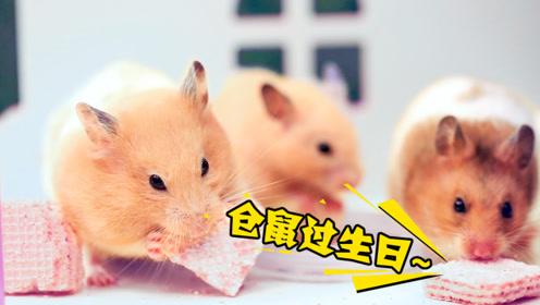 仓鼠:今天我生日,小伙伴们吃喝拉撒请随意!主人:今天你最大
