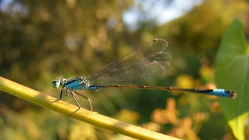 一年吃掉3000只蚊子,这样的昆虫,却被你们当做美食