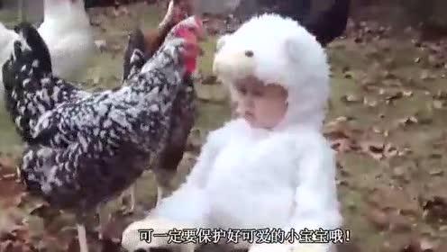 宝宝打了大公鸡一下,接下来大公鸡的反应,简直是噩梦啊笑翻了.