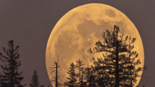 光线能从地球照射到月球吗?小哥用激光手电筒,下一秒意外发生!