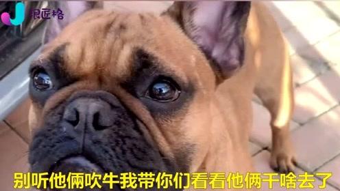 这只狗狗话太多了,一句话就把主人陷于尴尬的地位,太惨了