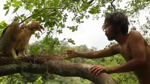 """""""野人""""爬上树冠偷蛋,遭老鹰强烈反击,镜头记录全过程"""