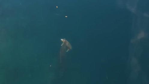 无人机拍到奇怪画面,海面出现一只古怪生物,众人纷纷猜测