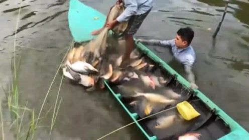 撒网捕鱼,男子随便撒一网,船都快装不下了