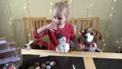 小主人劳拉做饼干,比格犬帮忙做力所能及的事,真是只懂事的狗狗
