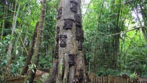 """印尼最古老的""""树葬""""仪式,一棵树能葬10多个人,仅限于婴儿"""