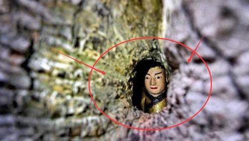 千年古树成精了,树内显现一尊神秘佛像,形成原因至今是谜