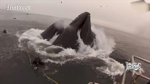 惊险的一幕,差点就被鲸鱼给吞进肚子里了