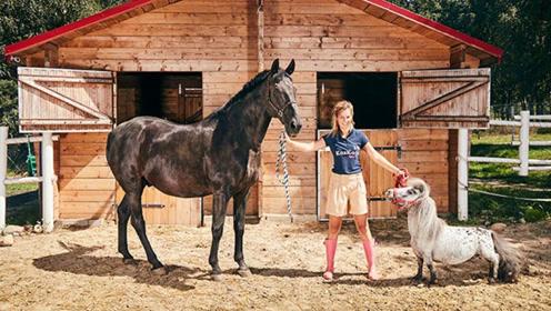 波兰发现世界上最小的马 身高仅为56.7厘米