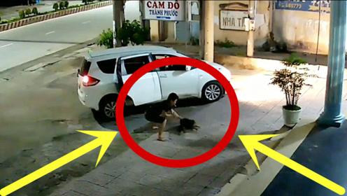 狗狗晚上睡不着,趴在地上守大门,下秒死亡倒计时启动!