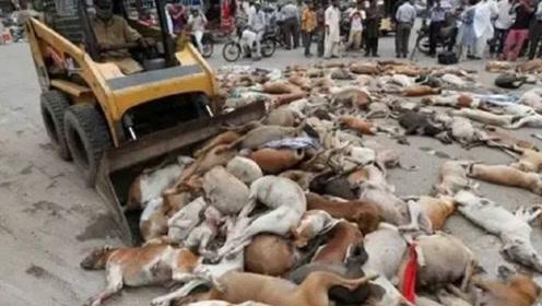 近千只狗狗尸体躺在马路上,路人非常气愤,得知原因后却默默离开