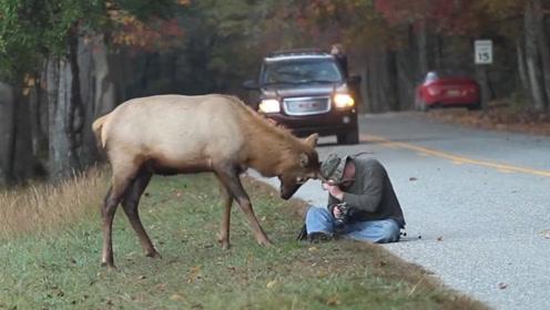 男子探险拍摄野鹿,鹿的反应绝了!镜头拍下全过程