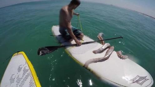 小伙冲浪被章鱼盯上,险些被拽到海里,结局出乎意料