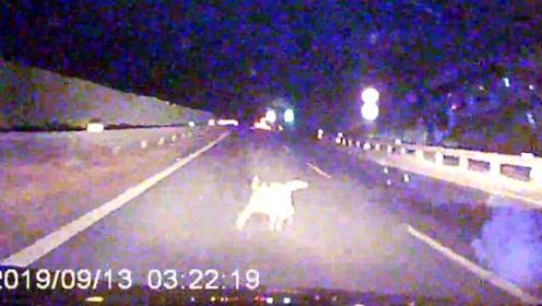 宠物狗窜上高速酿事故,民警:狗主人负事故全责