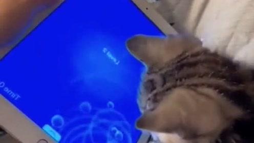 一个真敢抓,一个真敢吃,宠物猫咪搞笑是最认真的!