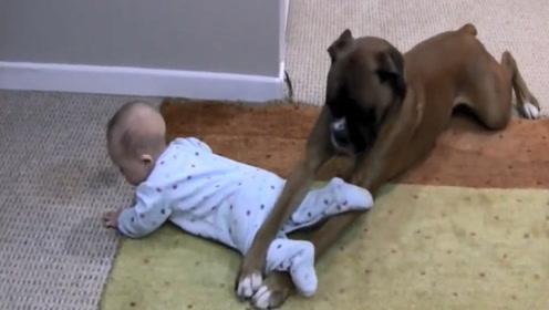 无人照顾孩子,妈妈叮嘱狗狗照看小主人,回家一看瞬间笑喷了