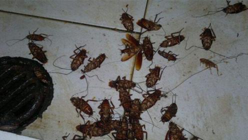 家里有蟑螂千万别用脚踩,角落放一碗,蟑螂来多少灭多少,真厉害