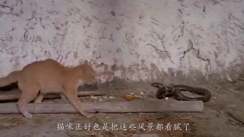 猫咪野外去巡游自己的江山去了,结果在半路上却遇到了一条毒蛇