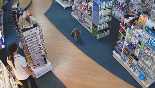出门买东西,竟偶遇了一只考拉逛超市,网友:实名羡慕啊