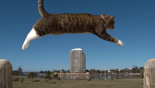 世界上最会玩滑板的猫,比主人玩的还溜,果然是个喵星人