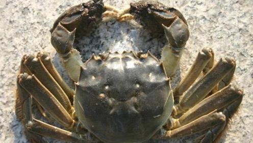"""村子后的""""螃蟹森林"""",树根下全是螃蟹,各个都是巨无霸"""