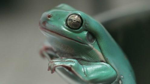 """""""温水煮青蛙""""究竟是真是假?老外亲测,看来青蛙也不傻嘛!"""