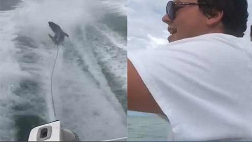 残忍!美国两男子开快艇将鲨鱼拖死,被判十天监禁