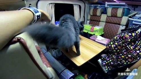 房车除能旅行外,还能这样玩!半路蓝猫傻了!