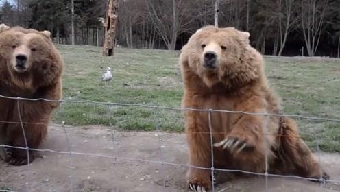 小哥拿摄像机对着灰熊,灰熊还对着镜子招手,还真是可爱