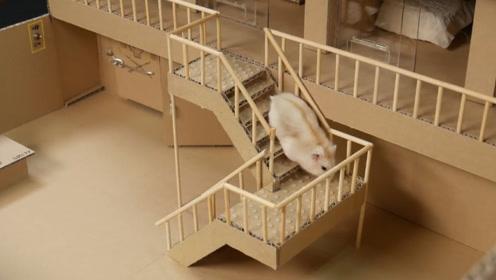 """老外打造一座""""监狱"""",把仓鼠关在里面,不料仓鼠还想逃狱!"""