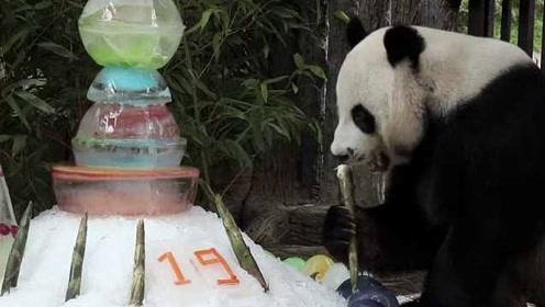 旅泰大熊猫创创死前刚进食过,死因仍待中国专家一同调查