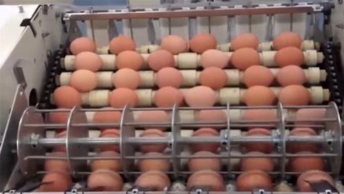 全国每天消耗数十亿颗鸡蛋,看完鸡蛋生产过程,简直颠覆你的想象
