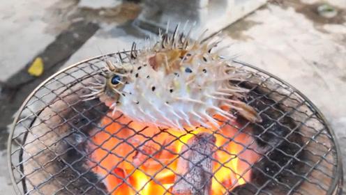 日本男子竟用炭火烤活河豚,镜头拍下全过程,网友:太残忍