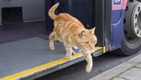 猫咪每天独自坐公交,司机总会等它上车,背后的真相让人泪奔!