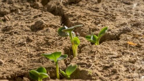 我国花7年在沙漠种出蔬菜,效果和土地一样,未来沙漠可以种地?