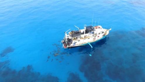 现实版惊涛狂鲨!渔船被巨鲨一路追赶,镜头拍下全过程