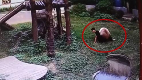 男子偷翻进熊猫园摸熊猫,结果熊猫死活不让他走,镜头拍下全过程