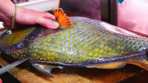 """日本""""泰坦鱼""""走红网络,想要吃它需要四把刀,大厨看了瑟瑟发抖"""