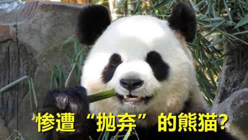 """国宝熊猫遭""""退货""""?外国人表示含泪送回,原因令人哭笑不得"""