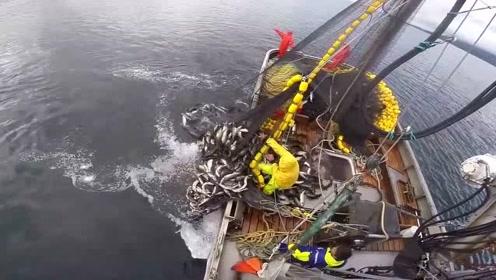 这才是高手,那么大的渔网,三个人就能操作过来
