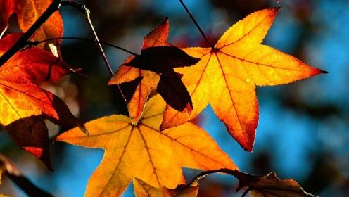 全国入秋进程图出炉,你家入秋了吗?